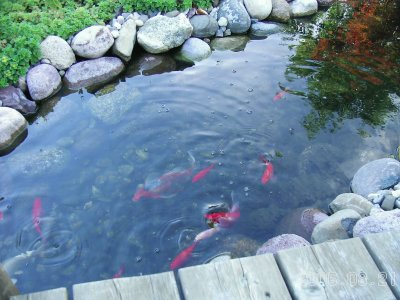 Fish_in_stream