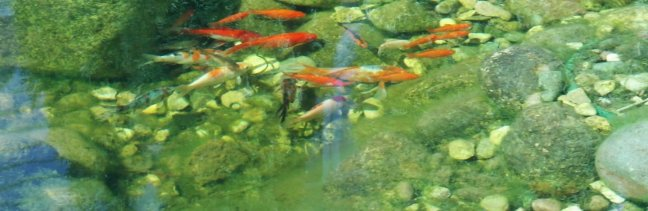 Fish_in_the_pond_2
